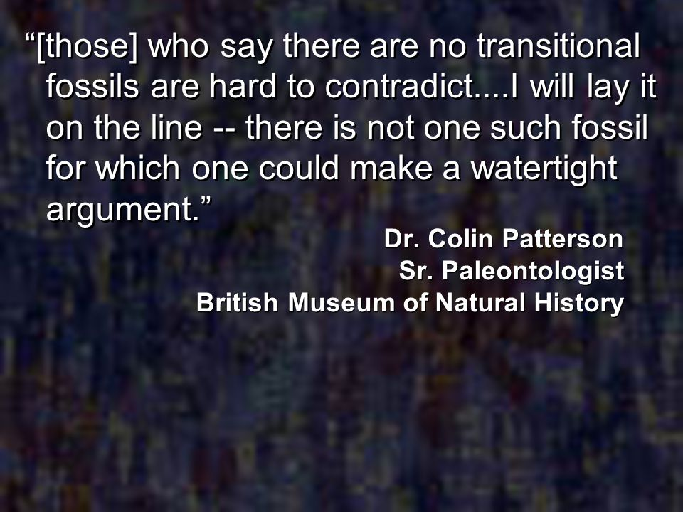 [those] who say there are no transitional fossils are hard to contradict....I will lay it on the line -- there is not one such fossil for which one could make a watertight argument.
